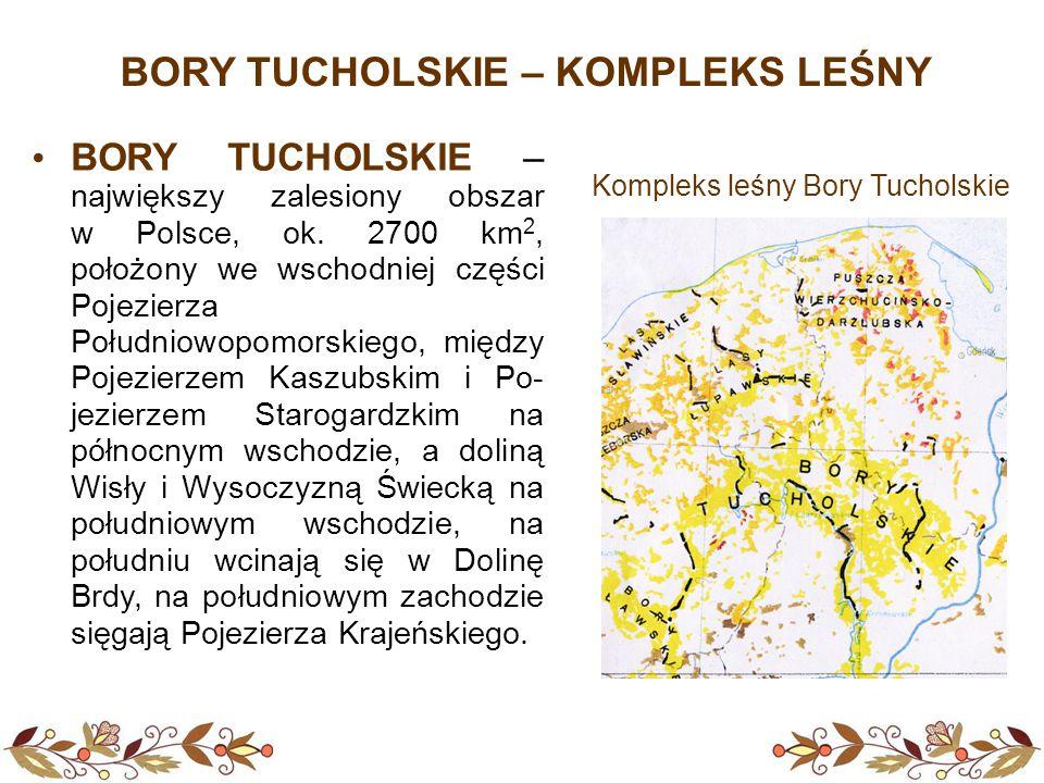 BORY TUCHOLSKIE – KOMPLEKS LEŚNY BORY TUCHOLSKIE – największy zalesiony obszar w Polsce, ok. 2700 km 2, położony we wschodniej części Pojezierza Połud