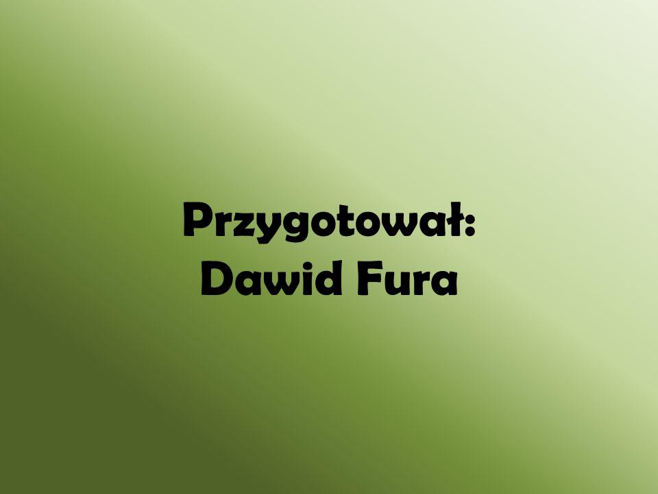 Przygotował: Dawid Fura
