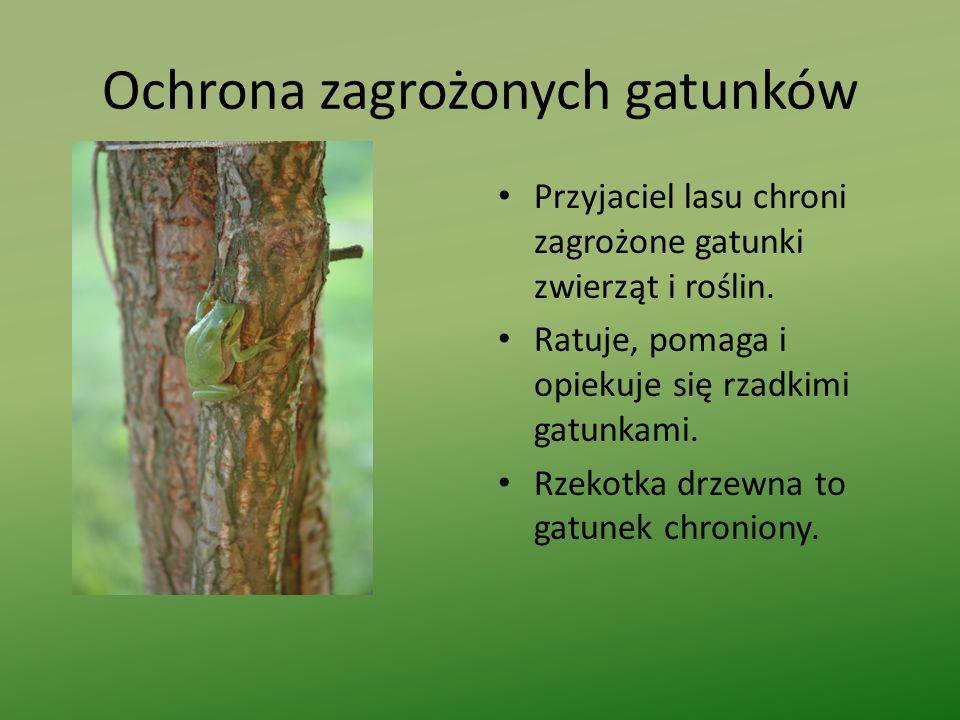 Ochrona zagrożonych gatunków Przyjaciel lasu chroni zagrożone gatunki zwierząt i roślin.