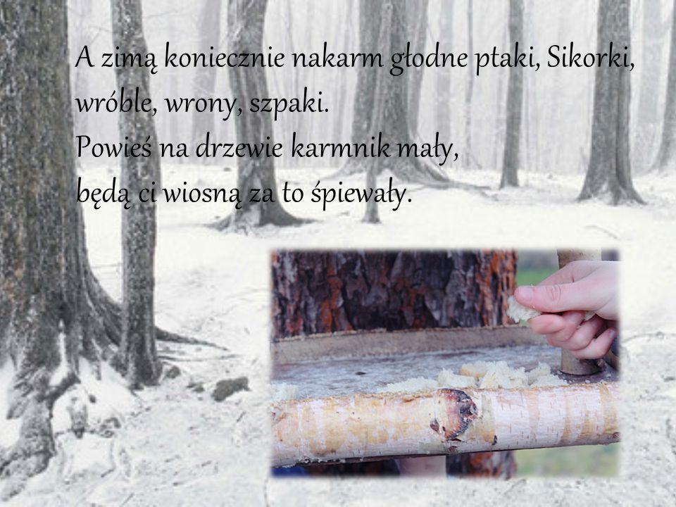 A zimą koniecznie nakarm głodne ptaki, Sikorki, wróble, wrony, szpaki. Powieś na drzewie karmnik mały, będą ci wiosną za to śpiewały.