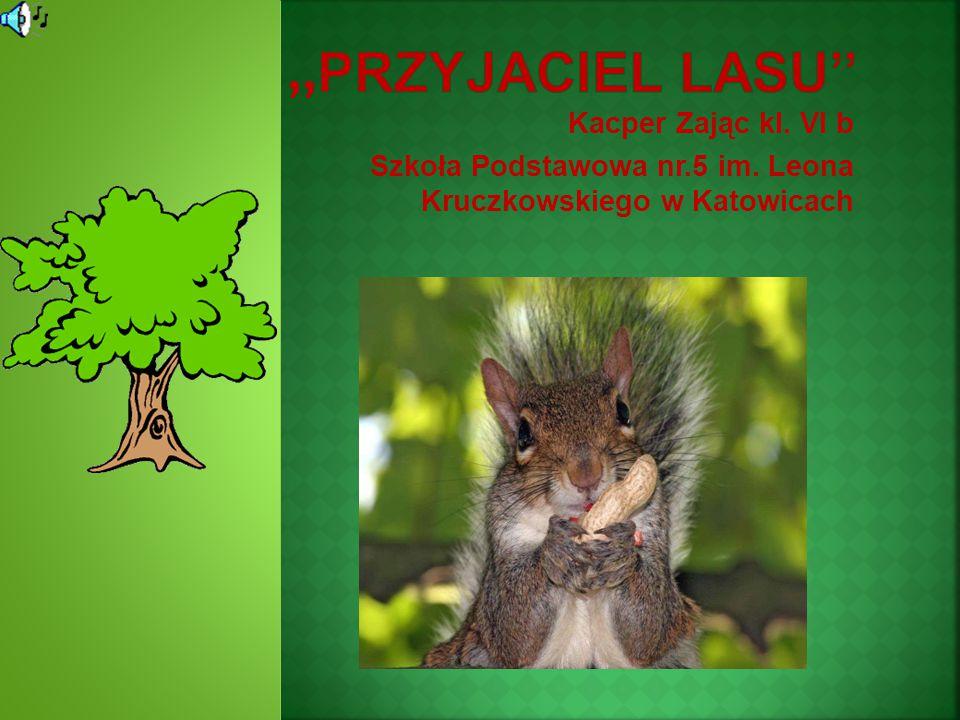 Kacper Zając kl. VI b Szkoła Podstawowa nr.5 im. Leona Kruczkowskiego w Katowicach