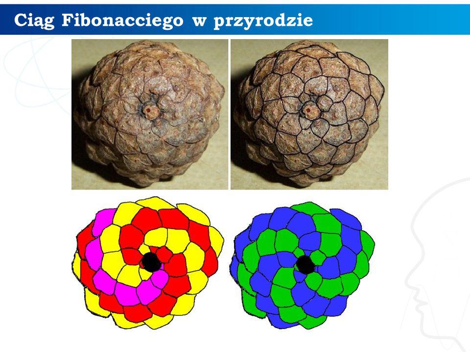 Ciąg Fibonacciego w przyrodzie 11