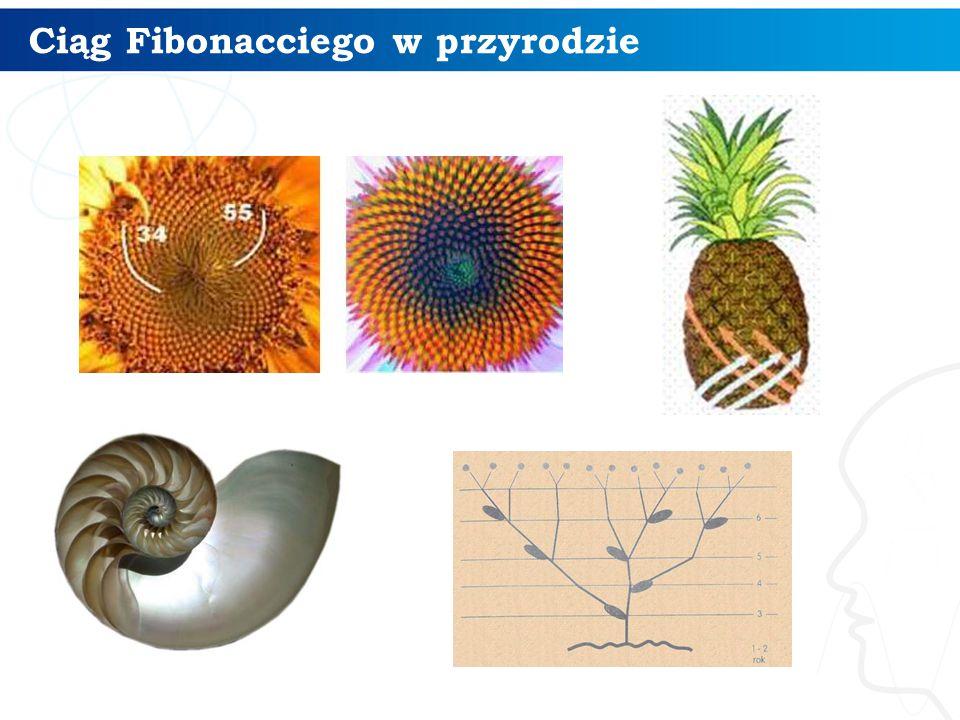 Ciąg Fibonacciego w przyrodzie 12