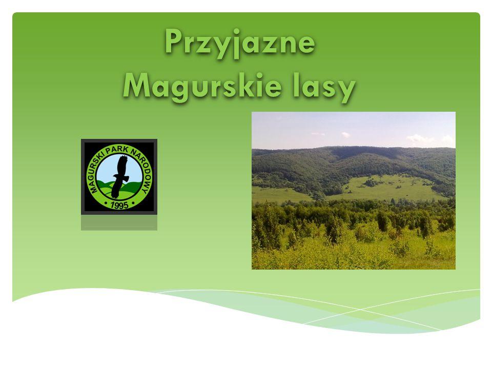 Przyjazne Magurskie lasy