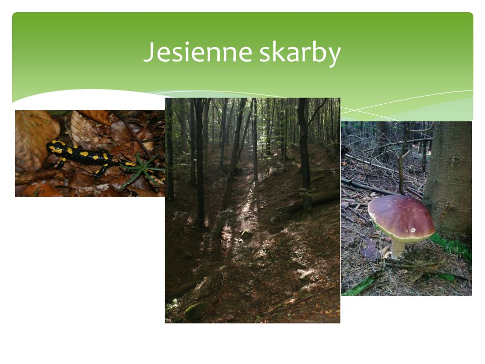 W buczynie W lasach Magury buki królują, Piękne widoki przez cały rok malują.
