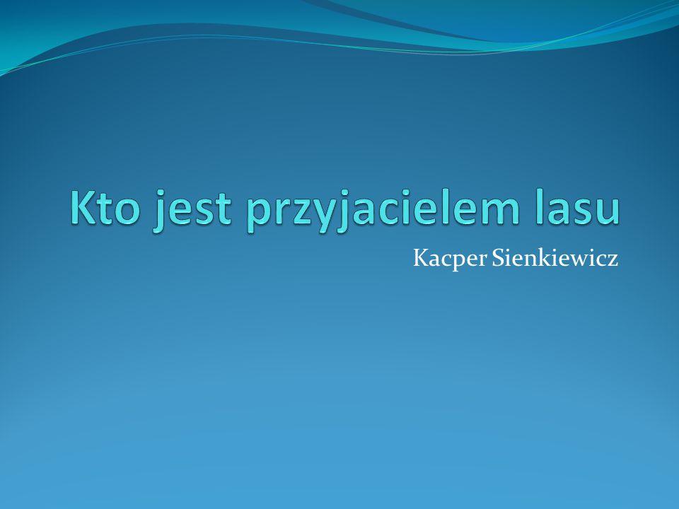 Kacper Sienkiewicz
