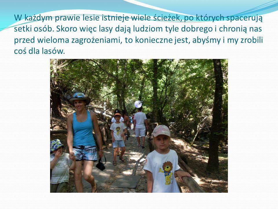 W każdym prawie lesie istnieje wiele ścieżek, po których spacerują setki osób.