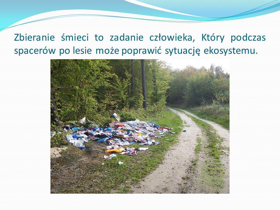 Zbieranie śmieci to zadanie człowieka, Który podczas spacerów po lesie może poprawić sytuację ekosystemu.