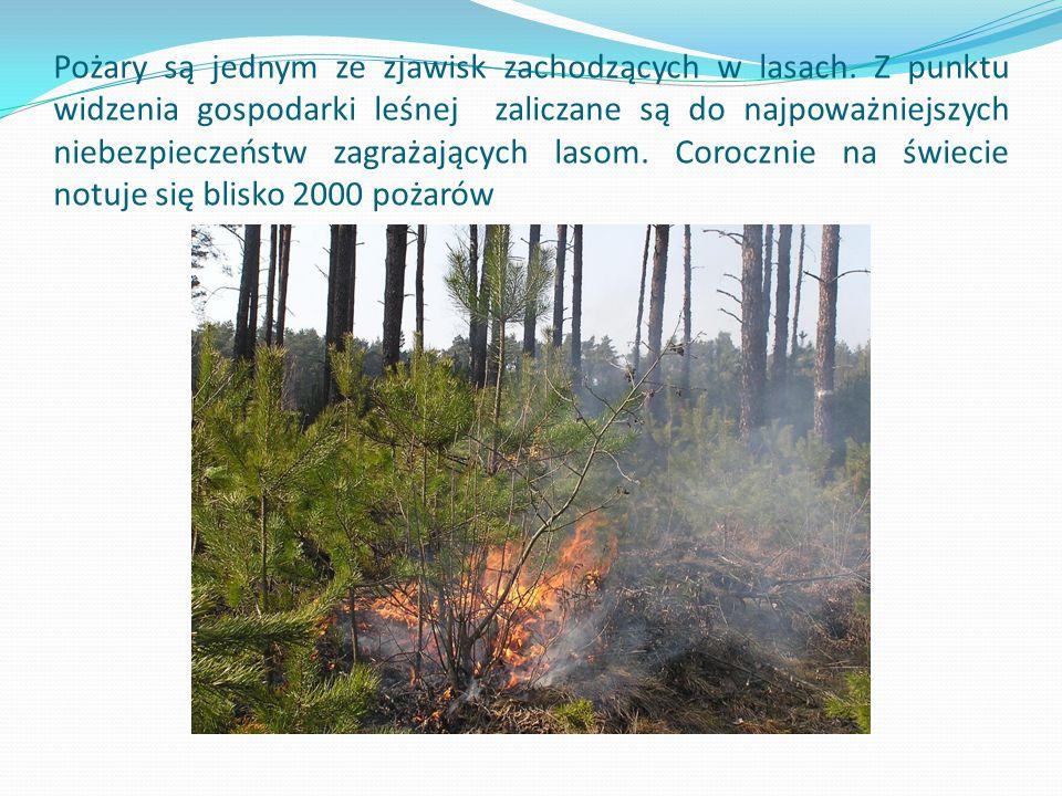 Pożary są jednym ze zjawisk zachodzących w lasach.