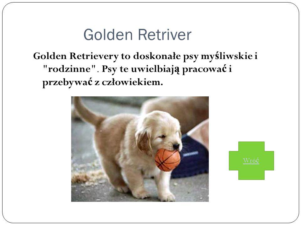 Golden Retriver Golden Retrievery to doskonałe psy my ś liwskie i rodzinne .