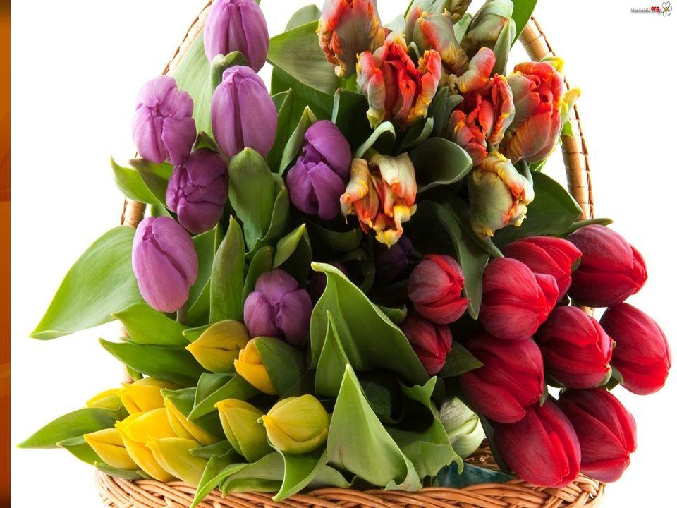 Zaopatrzenie sklepu w rośliny i materiały potrzebne do układania bukietów, takich jak np.