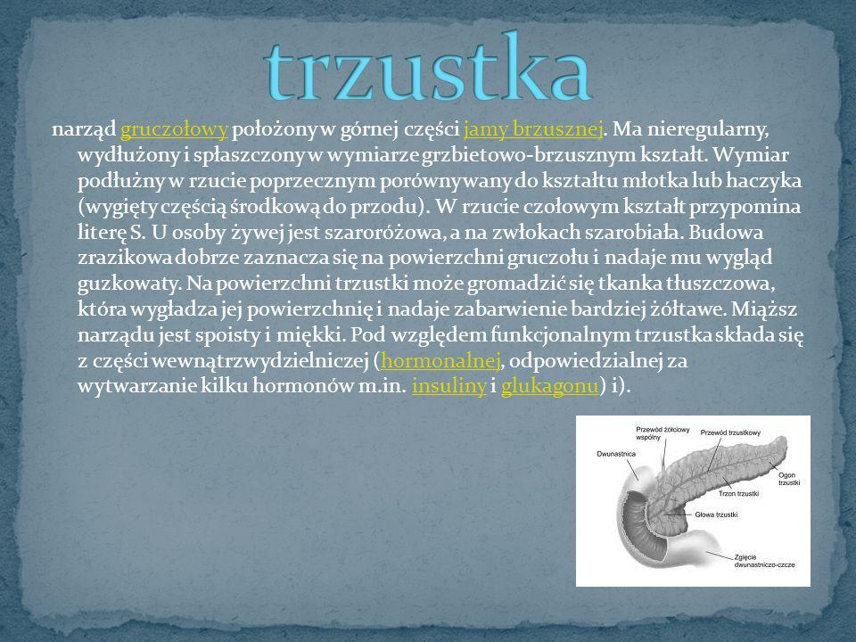 narząd gruczołowy położony w górnej części jamy brzusznej. Ma nieregularny, wydłużony i spłaszczony w wymiarze grzbietowo-brzusznym kształt. Wymiar po