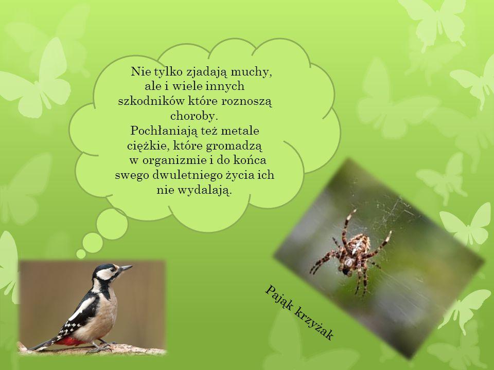 Mrówki rozkładają szczątki roślin i zwierząt na próchnice.