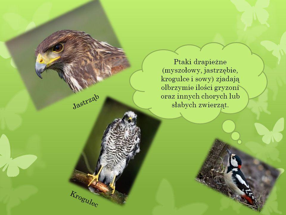 Naturalną ochroną drzewostanu leśnego stanowią ptaki owadożerne.