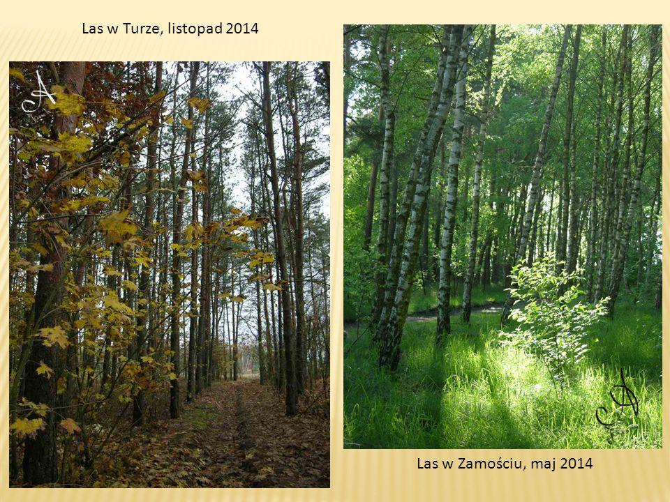 Las w Turze, listopad 2014 Las w Zamościu, maj 2014