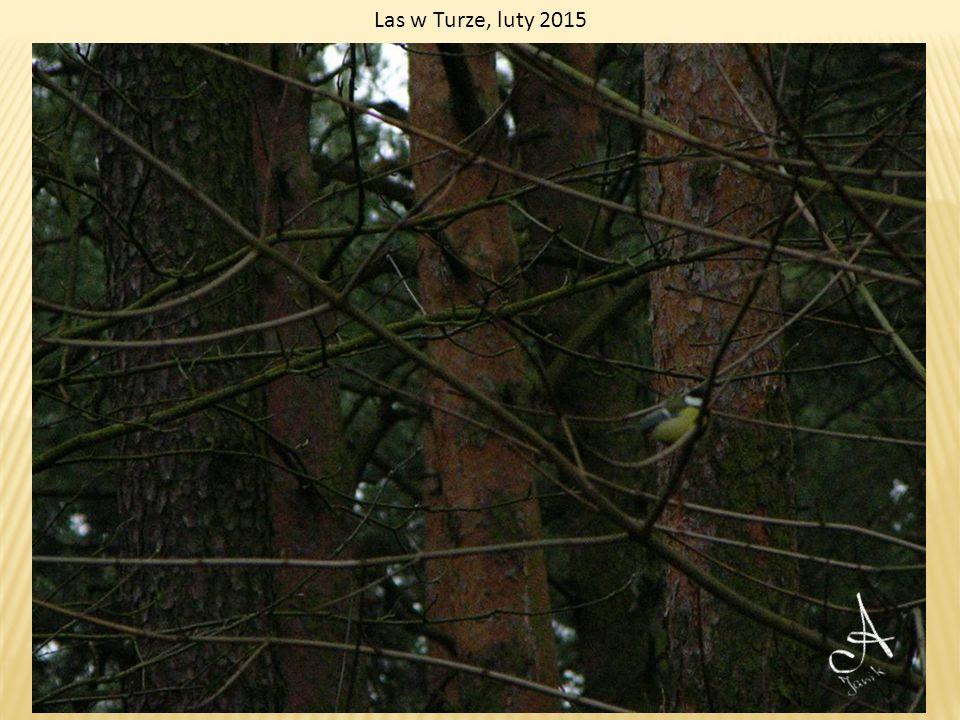 Las w Białych Błotach, luty 2015