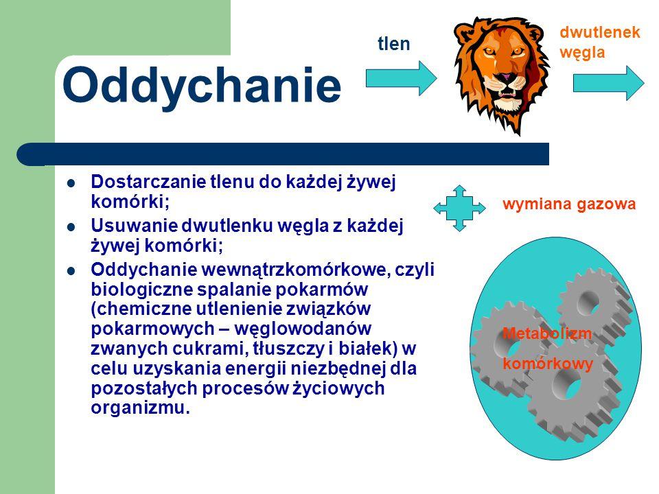 Oddychanie Dostarczanie tlenu do każdej żywej komórki; Usuwanie dwutlenku węgla z każdej żywej komórki; Oddychanie wewnątrzkomórkowe, czyli biologiczn