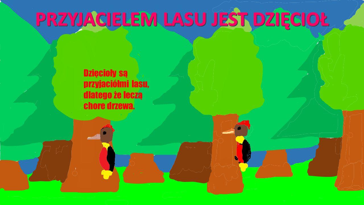 Dzięcioły są przyjaciółmi lasu, dlatego że leczą chore drzewa.