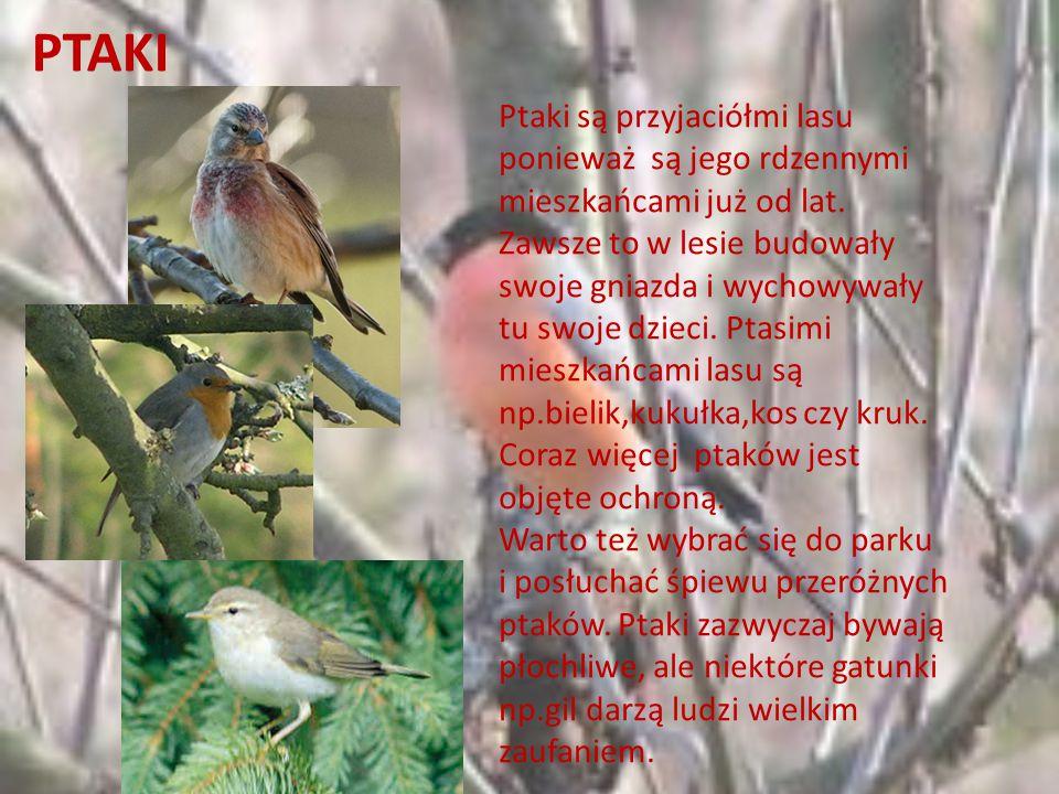 Przyjaciele lasu Ptaki Ssaki Ludzie Owady Drzewa