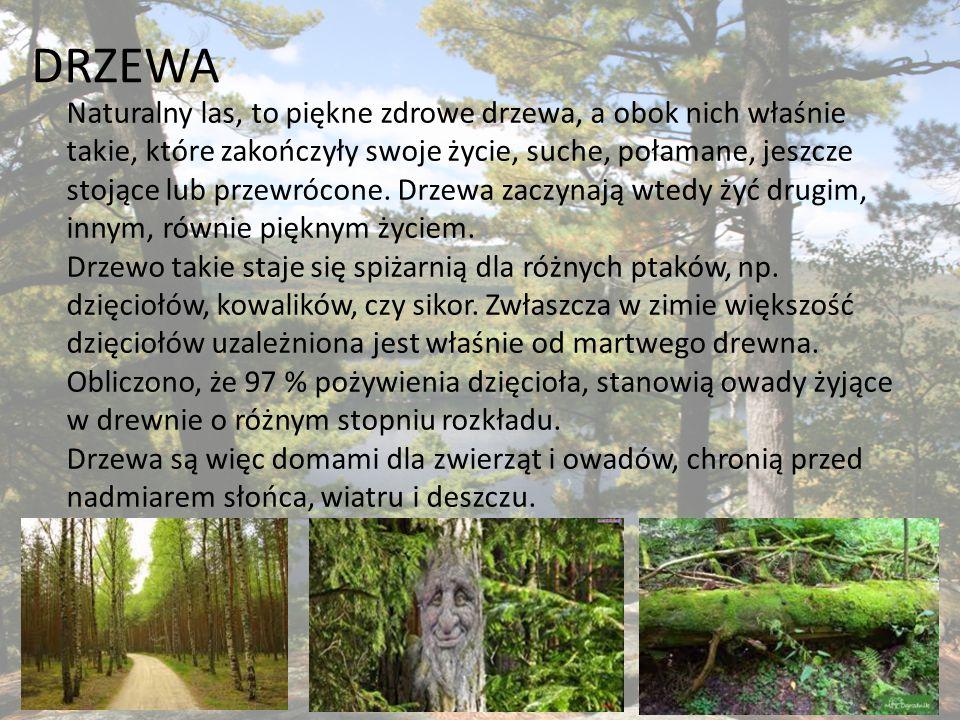Mali mieszkańcy w lesie