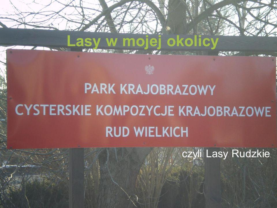 Sosny i modrzewie Sosna to jedno z najliczniejszych drzew w Lasach Rudzkich, mają one długie kłujące igły.