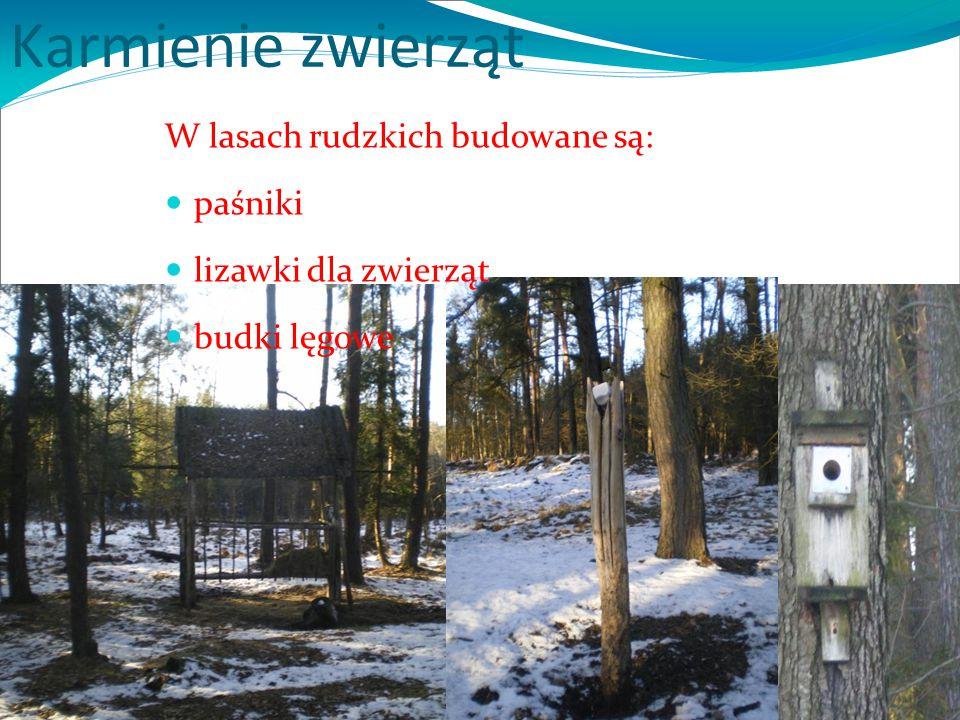 Karmienie zwierząt W lasach rudzkich budowane są: paśniki lizawki dla zwierząt budki lęgowe