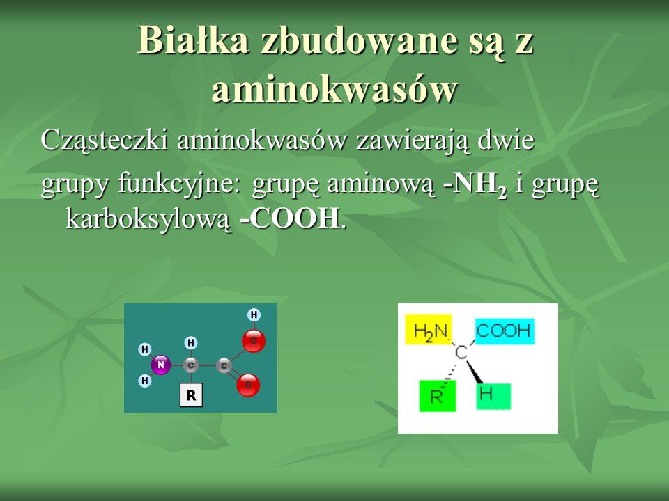 Białka zbudowane są z aminokwasów Cząsteczki aminokwasów zawierają dwie grupy funkcyjne: grupę aminową -NH 2 i grupę karboksylową -COOH.