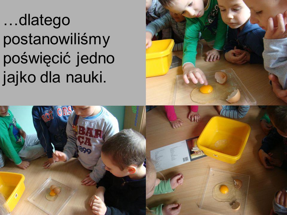 …dlatego postanowiliśmy poświęcić jedno jajko dla nauki.