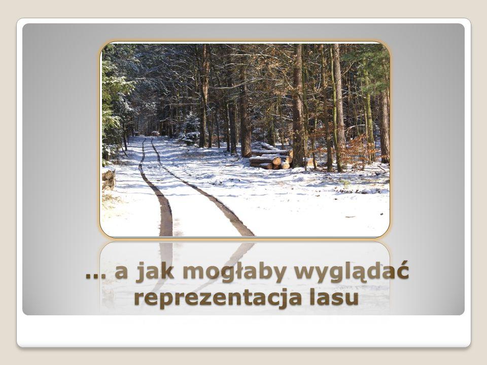 Lasy w Polsce zajmują 9,1 mln hektarów Wyobraźcie sobie, że to jest ponad 9 milionów dużych boisk piłkarskich