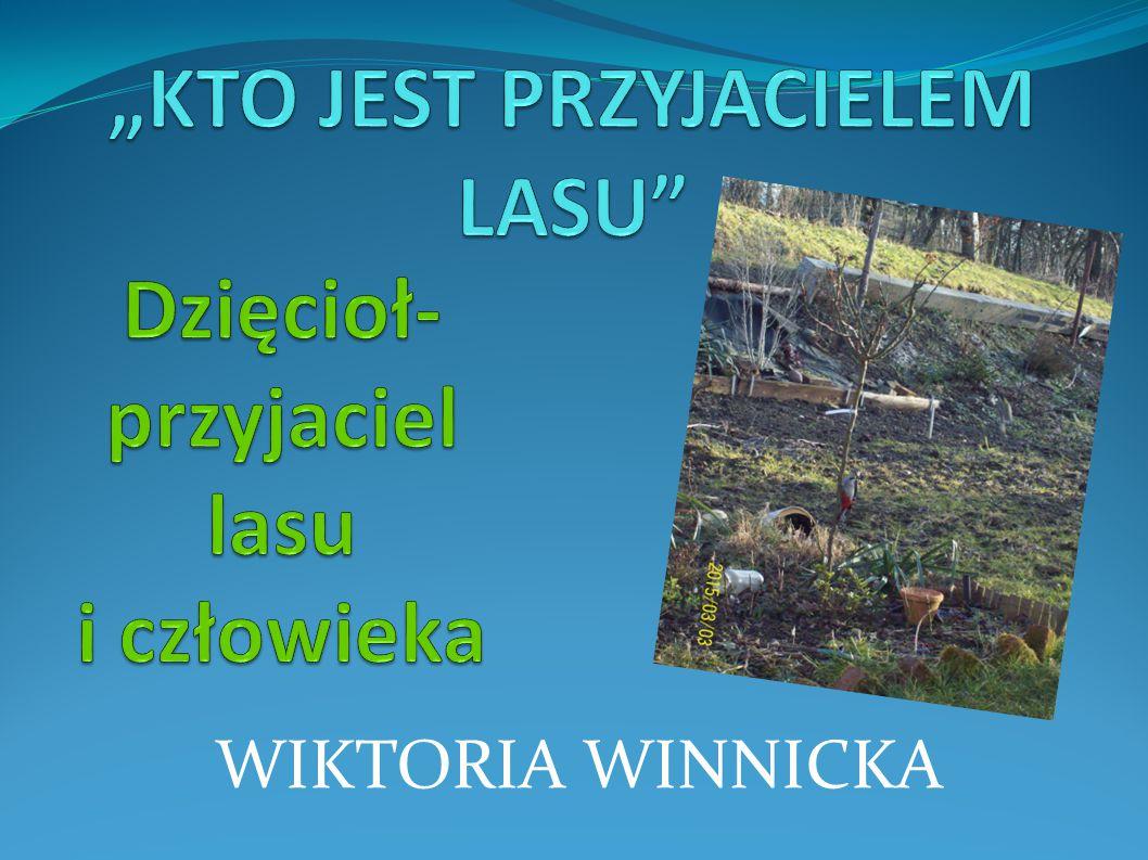 Moim zdaniem przyjacielem lasu jest dzięcioł, ponieważ jego pożywienie stanowią robaki, często pasożytujące i niszczące drzewa naszych lasów.
