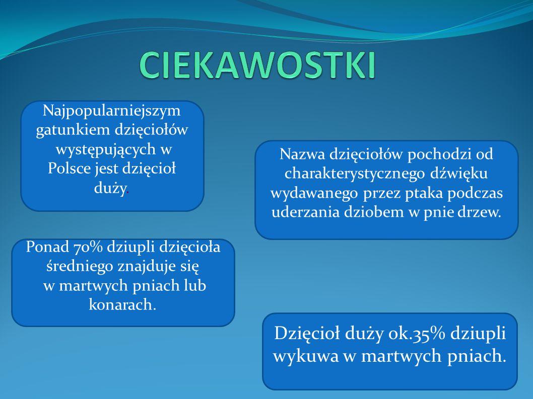 Najpopularniejszym gatunkiem dzięciołów występujących w Polsce jest dzięcioł duży. Nazwa dzięciołów pochodzi od charakterystycznego dźwięku wydawanego