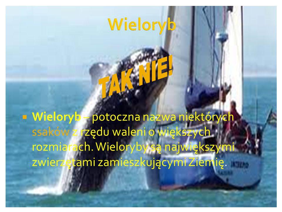  Wieloryb – potoczna nazwa niektórych ssaków z rzędu waleni o większych rozmiarach.