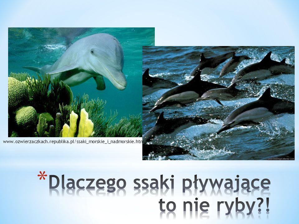 www.ozwierzaczkach.republika.pl/ssaki_morskie_i_nadmorskie.htm