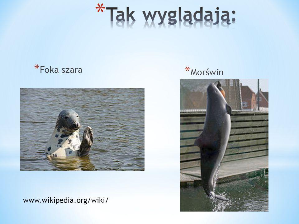 * Foka szara * Morświn www.wikipedia.org/wiki/
