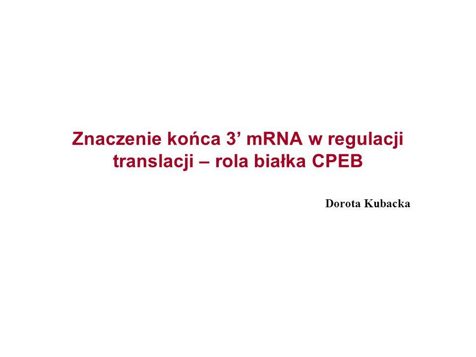 Znaczenie końca 3' mRNA w regulacji translacji – rola białka CPEB Dorota Kubacka