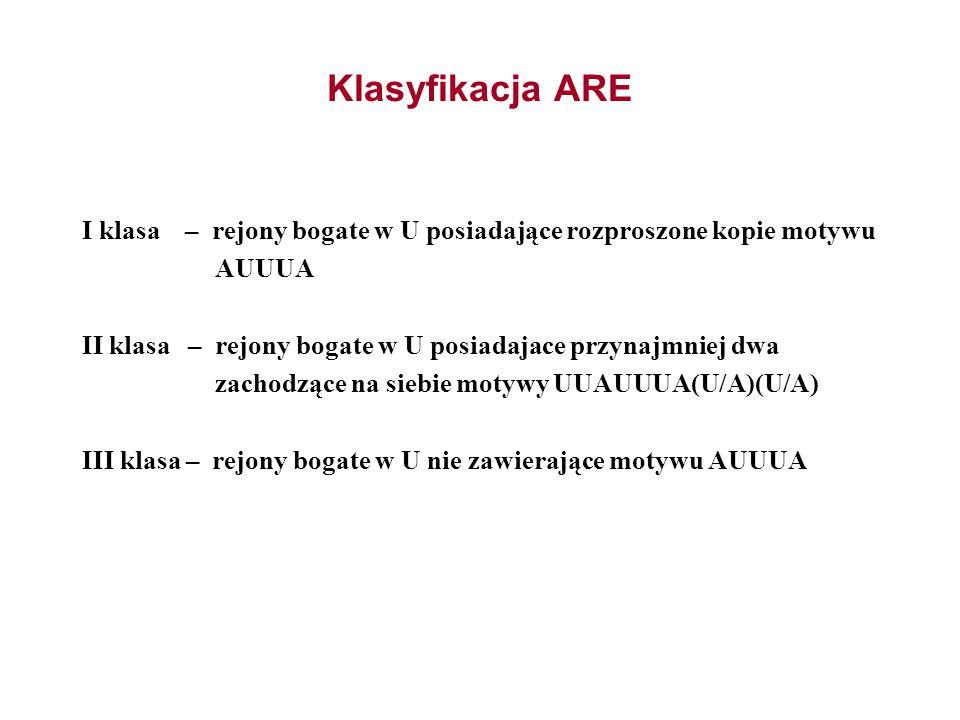 Klasyfikacja ARE I klasa – rejony bogate w U posiadające rozproszone kopie motywu AUUUA II klasa – rejony bogate w U posiadajace przynajmniej dwa zach