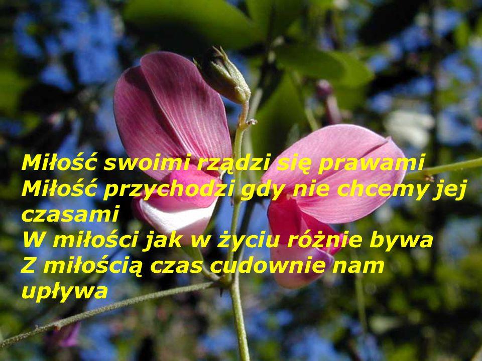 Miłość swoimi rządzi się prawami Miłość przychodzi gdy nie chcemy jej czasami W miłości jak w życiu różnie bywa Z miłością czas cudownie nam upływa
