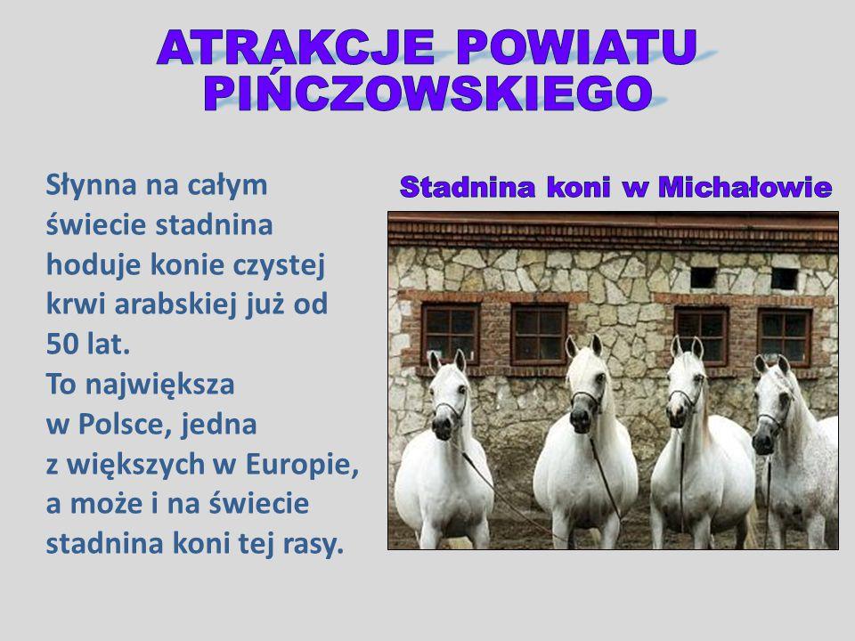 Słynna na całym świecie stadnina hoduje konie czystej krwi arabskiej już od 50 lat. To największa w Polsce, jedna z większych w Europie, a może i na ś