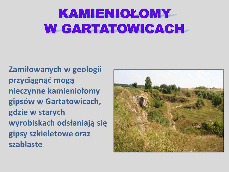 Zamiłowanych w geologii przyciągnąć mogą nieczynne kamieniołomy gipsów w Gartatowicach, gdzie w starych wyrobiskach odsłaniają się gipsy szkieletowe o
