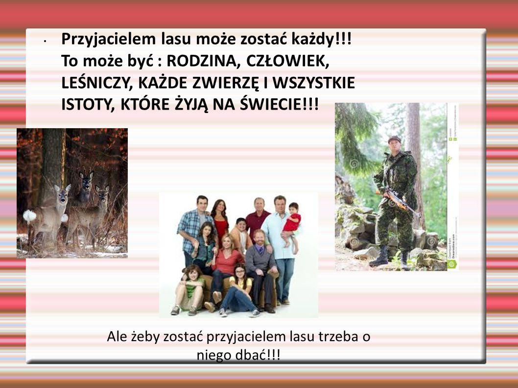 Ale żeby zostać przyjacielem lasu trzeba o niego dbać!!! Przyjacielem lasu może zostać każdy!!! To może być : RODZINA, CZŁOWIEK, LEŚNICZY, KAŻDE ZWIER