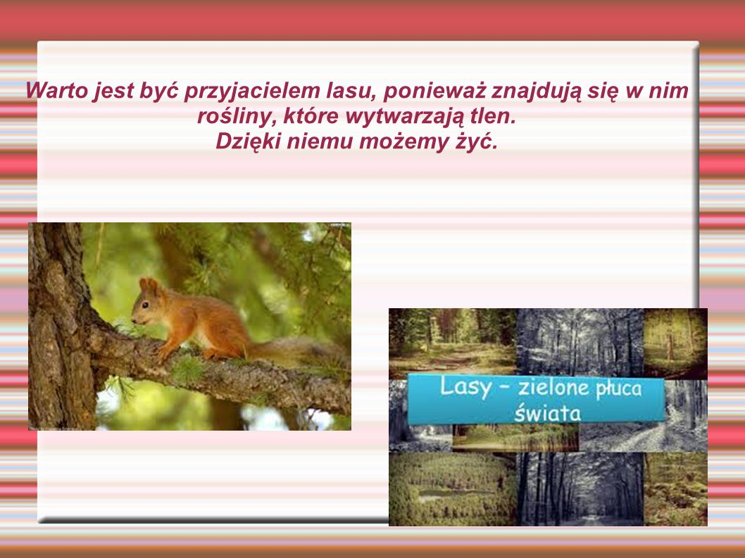 Warto jest być przyjacielem lasu, ponieważ znajdują się w nim rośliny, które wytwarzają tlen. Dzięki niemu możemy żyć.