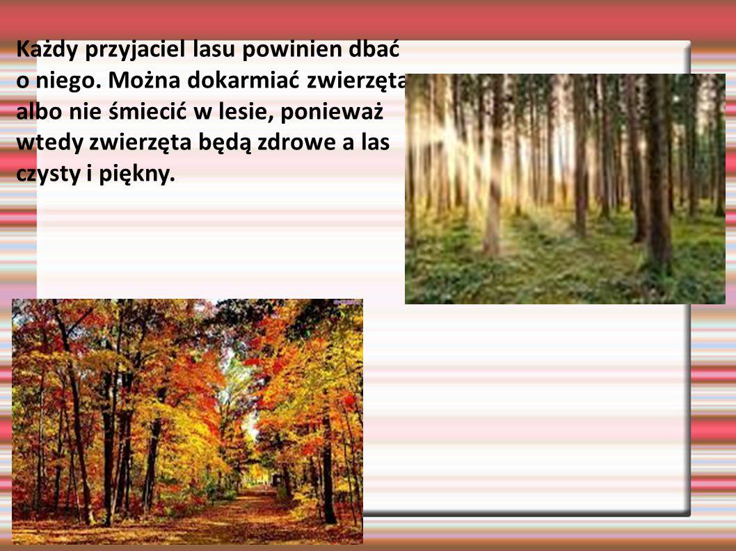 Każdy przyjaciel lasu powinien dbać o niego. Można dokarmiać zwierzęta albo nie śmiecić w lesie, ponieważ wtedy zwierzęta będą zdrowe a las czysty i p