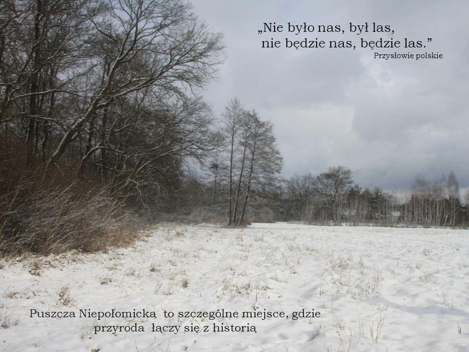 """Puszcza Niepołomicka to szczególne miejsce, gdzie przyroda łączy się z historią """"Nie było nas, był las, nie będzie nas, będzie las. Przysłowie polskie"""