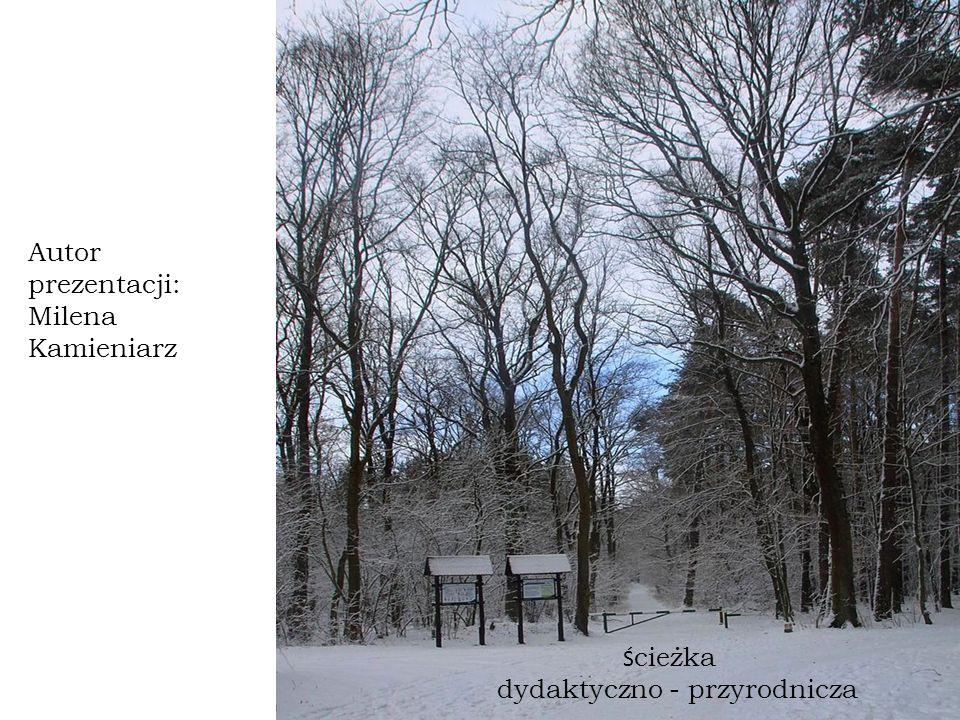 Ś cieżka dydaktyczno - przyrodnicza Autor prezentacji: Milena Kamieniarz