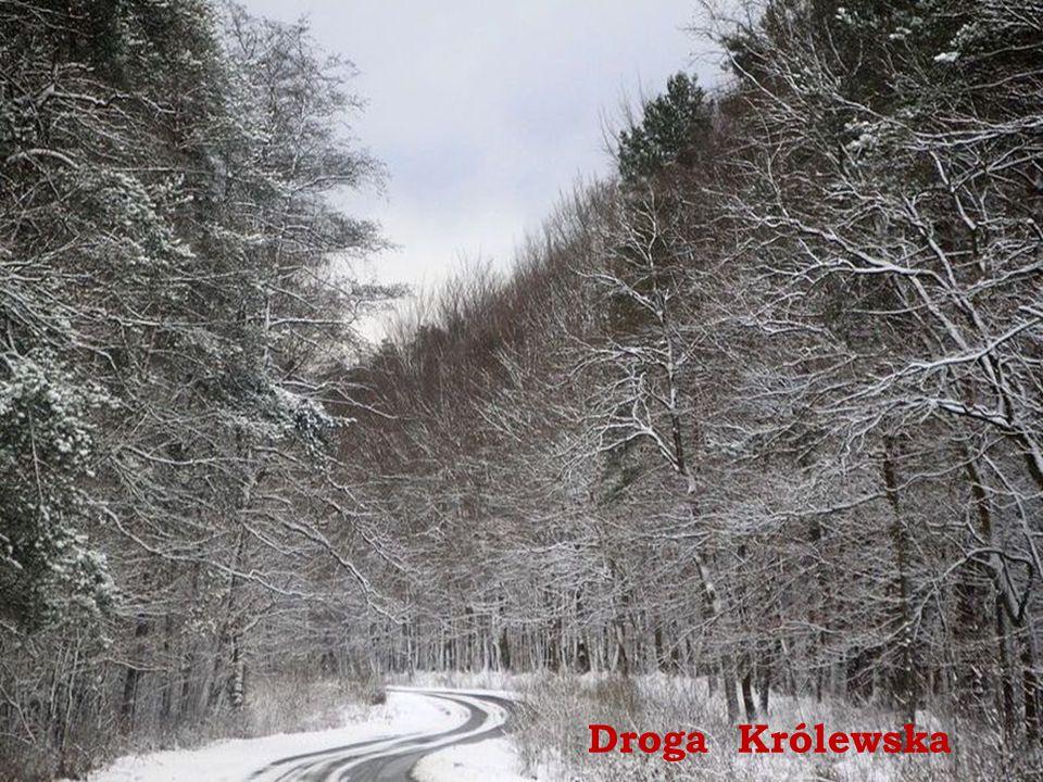 Droga Królewska