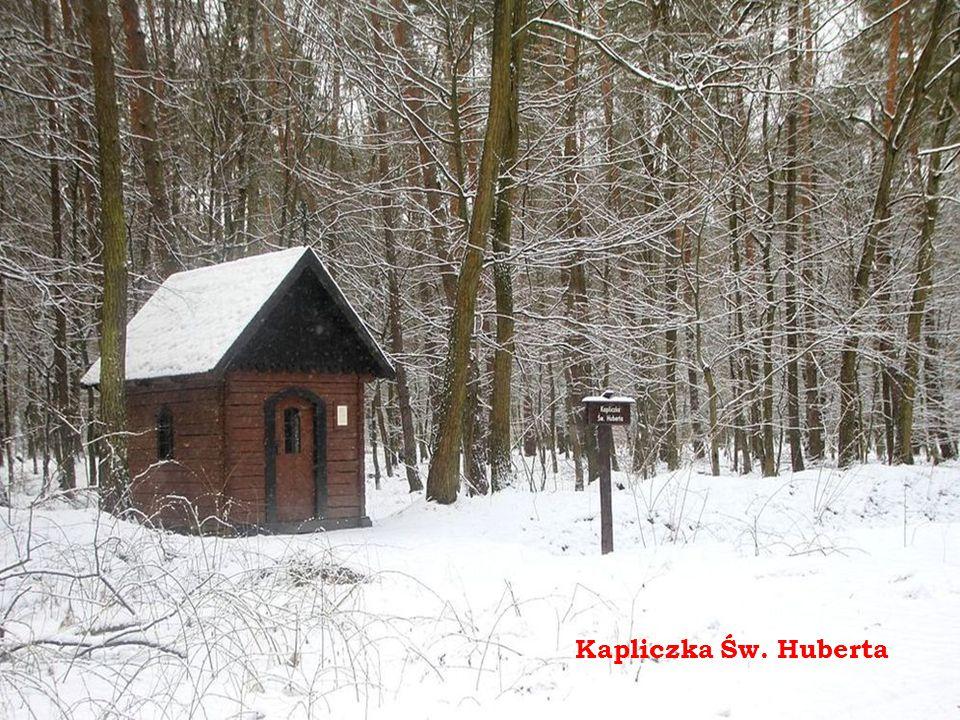 Dąb Króla Stefana Batorego i cmentarz wojenny z 1914 r.