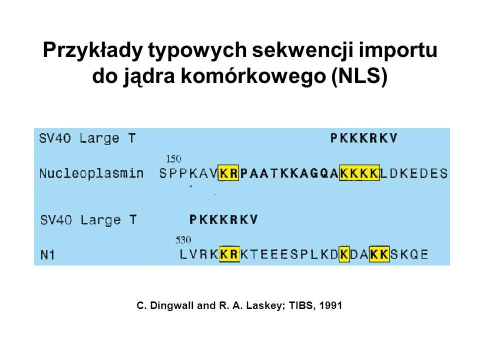 Przykłady typowych sekwencji importu do jądra komórkowego (NLS) C. Dingwall and R. A. Laskey; TIBS, 1991
