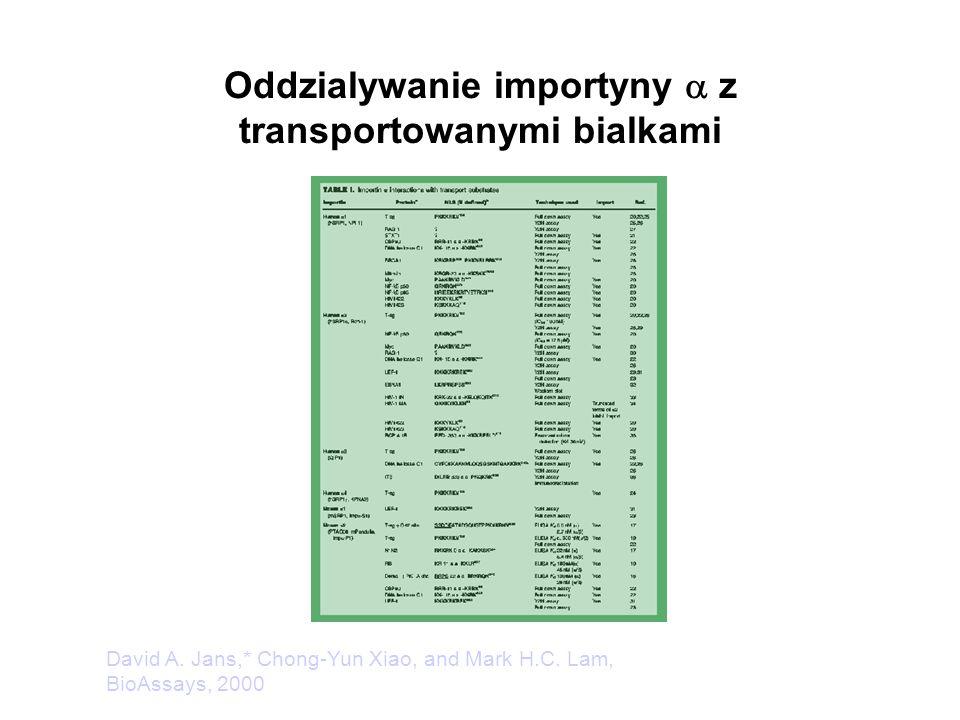Oddzialywanie importyny  z transportowanymi bialkami David A. Jans,* Chong-Yun Xiao, and Mark H.C. Lam, BioAssays, 2000