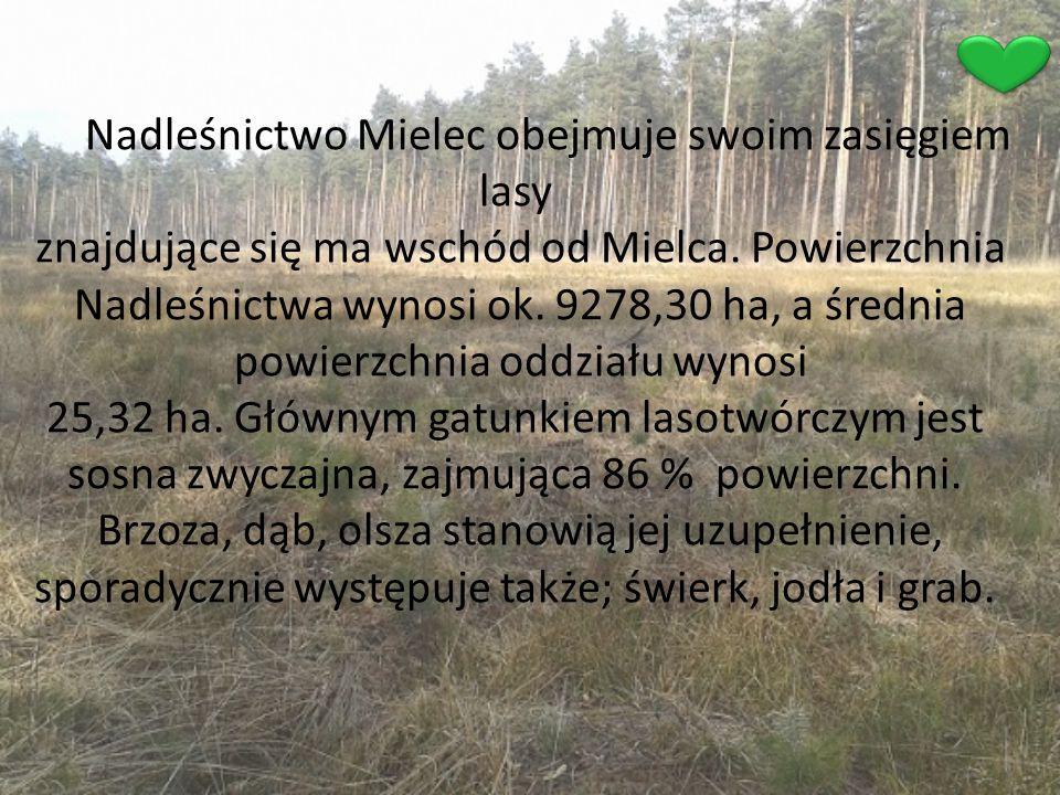Nadleśnictwo Mielec obejmuje swoim zasięgiem lasy znajdujące się ma wschód od Mielca. Powierzchnia Nadleśnictwa wynosi ok. 9278,30 ha, a średnia powie
