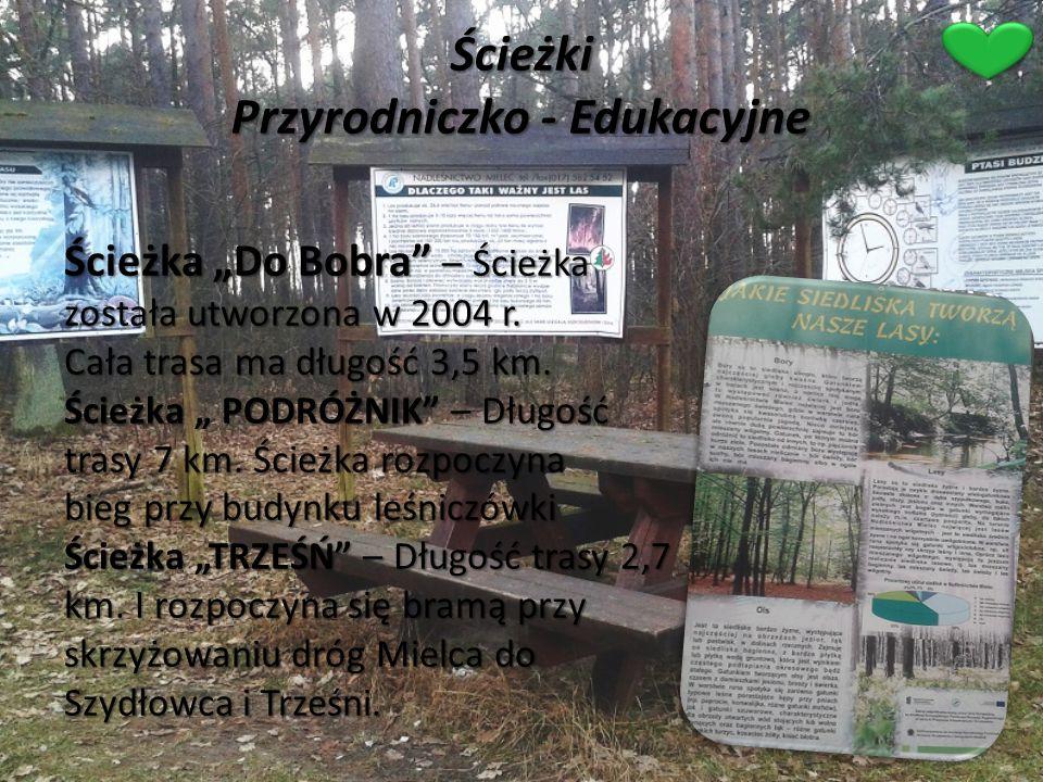 """Ścieżki Przyrodniczko - Edukacyjne Ścieżka """"Do Bobra"""" – Ścieżka została utworzona w 2004 r. Cała trasa ma długość 3,5 km. Ścieżka """" PODRÓŻNIK"""" – Długo"""